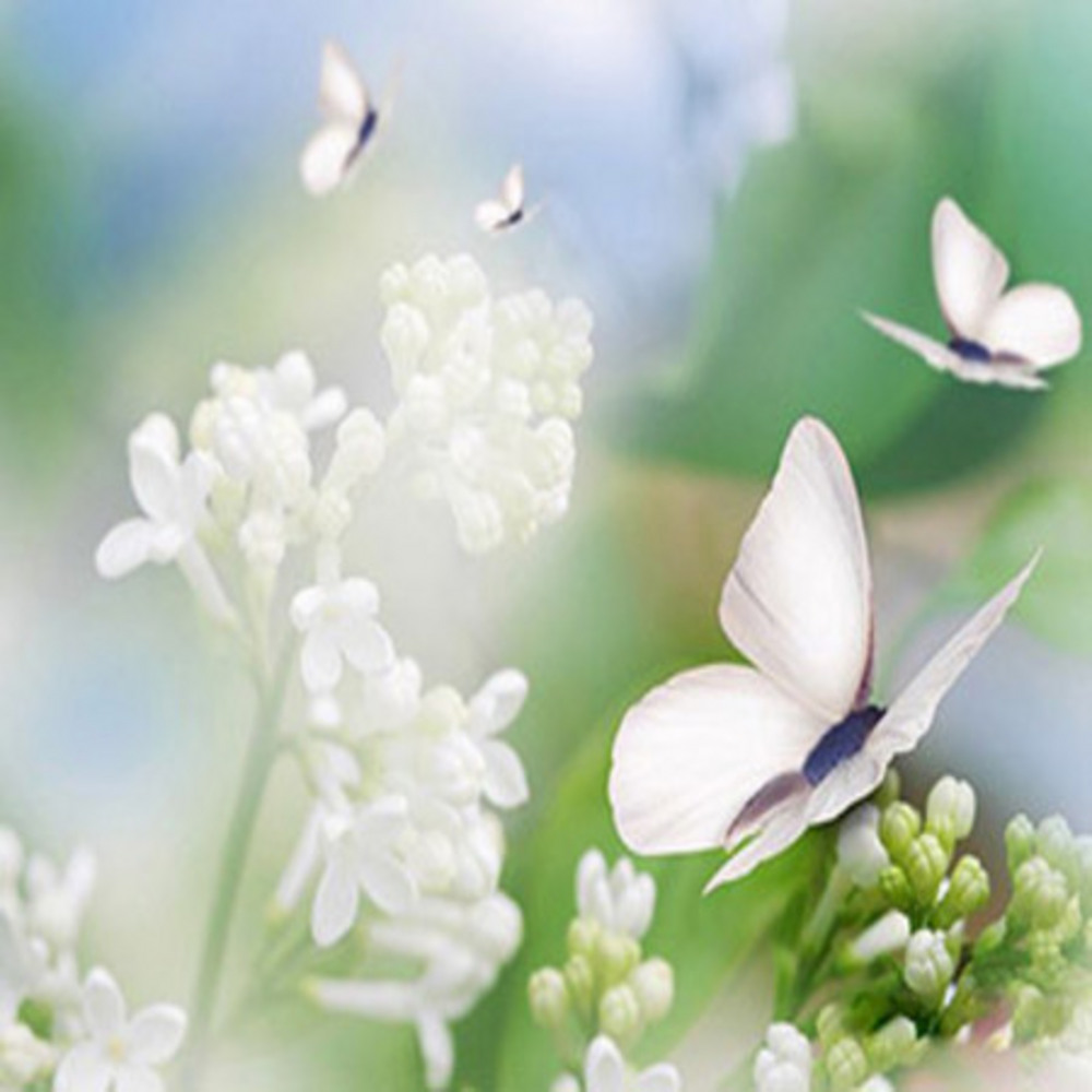 Butterfly white flowers design evolvingminds butterfly white flowers design mightylinksfo